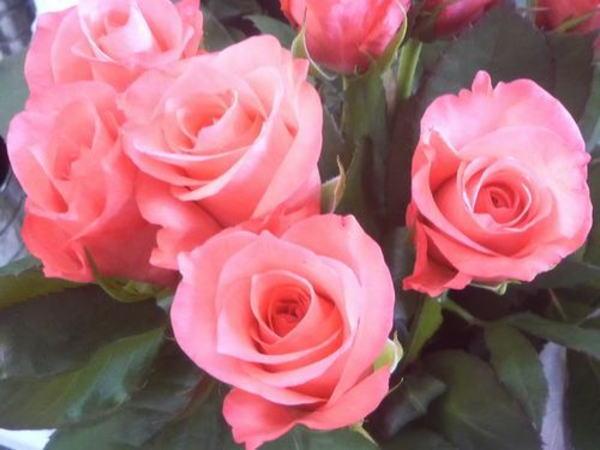 かんさいフラワーショーのバラ