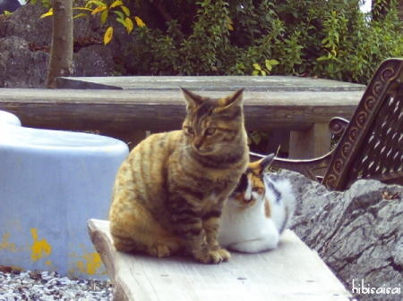 展望台にいたネコ