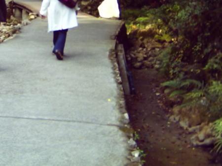 秋芳洞へ通じる杉木立