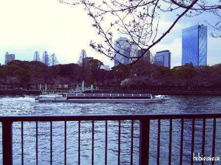 毛馬桜之宮公園から見た大川