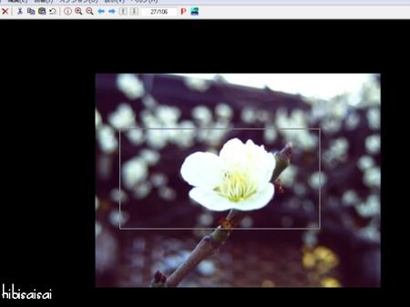 IrfanView 画像の上に選択範囲を再表示