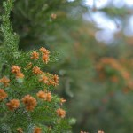 花粉症じゃない人のための豆知識 杉花粉はどこでできる?