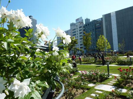 中之島バラ園 バラの広場