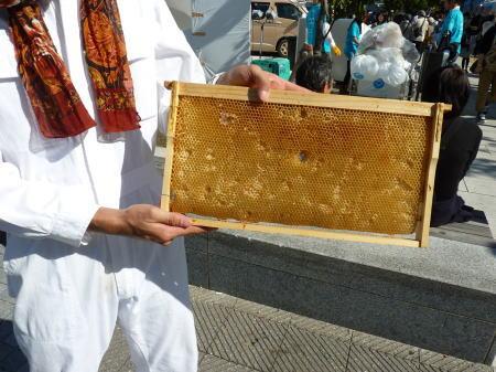 蜜蜂の巣 新しいもの