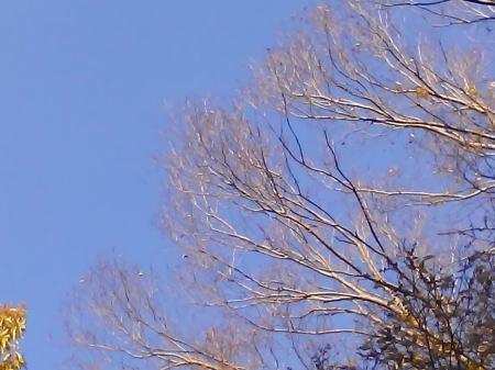 YOGA TABLET8で木の枝を撮影