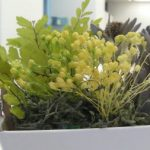 癒しのグリーンをお部屋にコレクションする フェリシモのプリザーブド・アレンジボックス