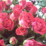 女性に贈るフラワーギフト 108本のバラの花束の意味は?