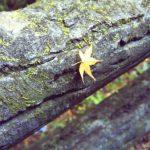 秋の衣替え・豆知識