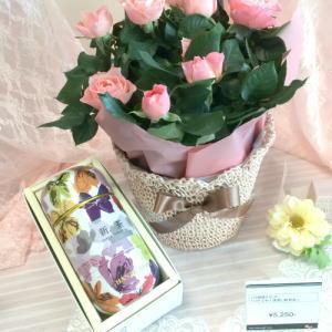 イイハナのバラの花鉢セット