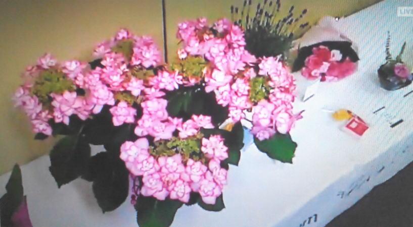 花鉢と花束、アレンジメントの比較