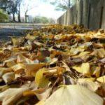 関西の冬はなぜ乾く?その理由と注意点まとめ