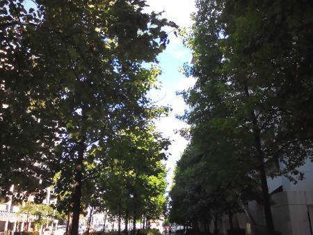 ポプラの並木道
