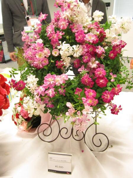 レンゲローズの花鉢