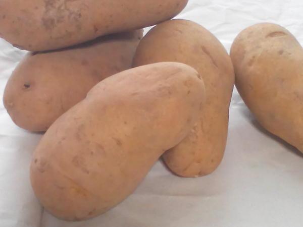 フードプラン ジャガイモ