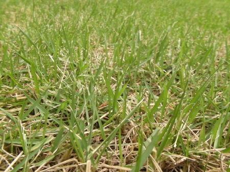 芝生のイメージ