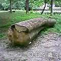 母と子の森/京都御苑