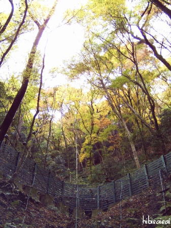 鬱蒼とした木々