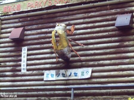 昆虫館そばのお店の蝉