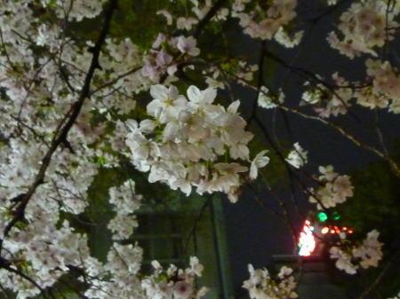 桜の向こうにネオン