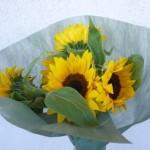 サムシングイエロー 父の日にひまわりの花を贈ってみた