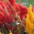 季節のお花のイメージ