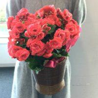 ボリアスダークの花鉢のサイズ感
