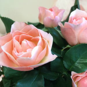 セットのフラワーギフトはピンクのバラの花