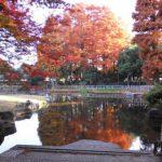 2010年秋に見る、紅葉を楽しむ豆知識