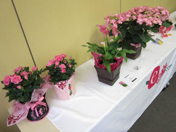 花鉢 比較