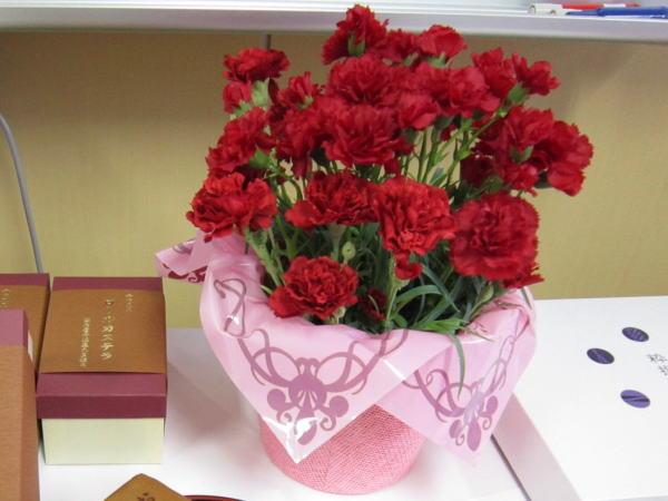 赤いカーネーションの花鉢