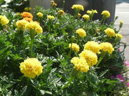 日差しを浴びる花のイメージ